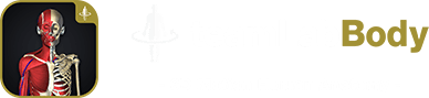 teamLabBody - 3D Motion Human Anatomy -