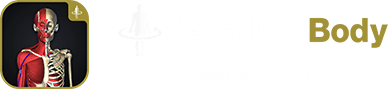 teamLabBody - Internal Organs -